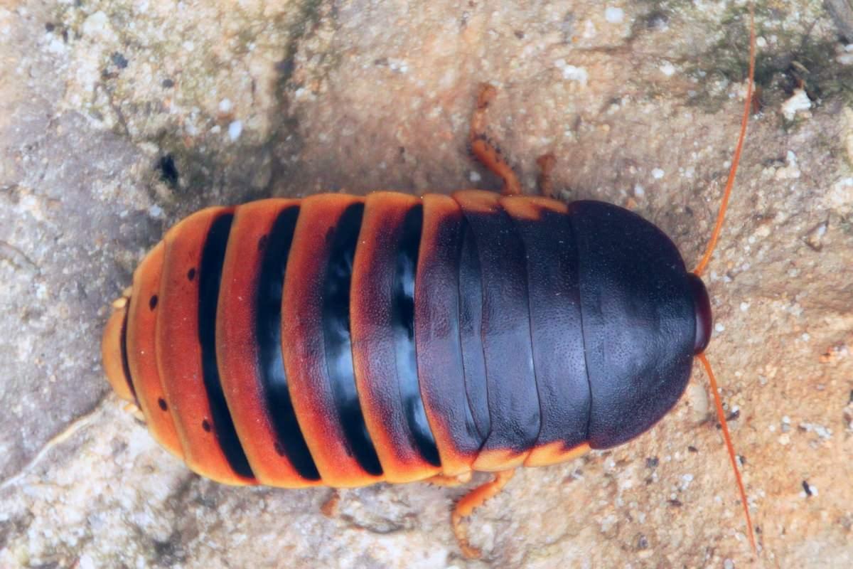 Käfer: Wir helfen schnell und sicher