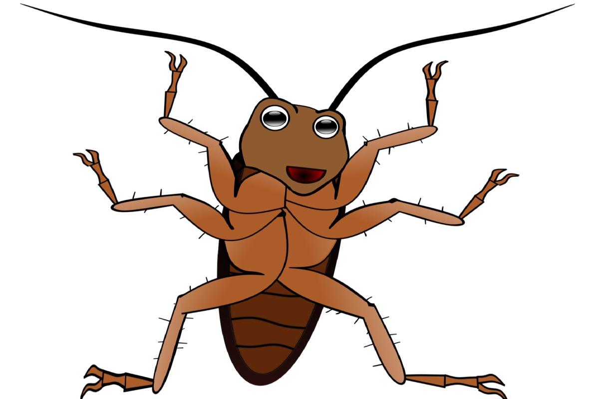 Bei einem Kakerlakenbefall ist schnelles Handeln ein Muss